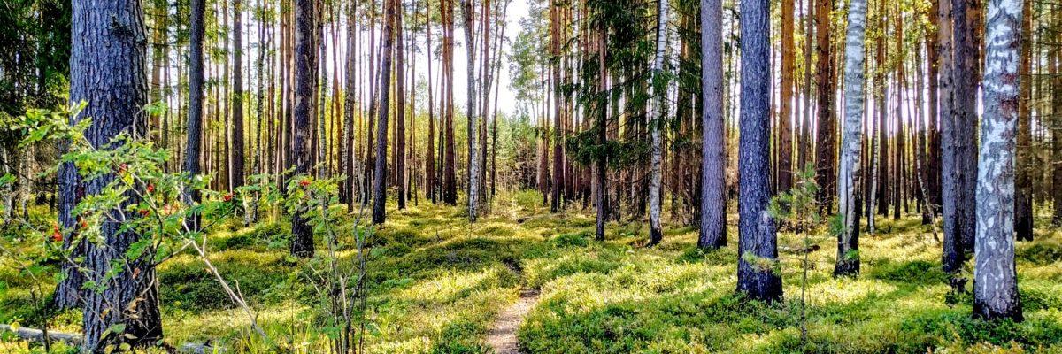 Investir en GFI (Groupement Forestier d'Investissement)